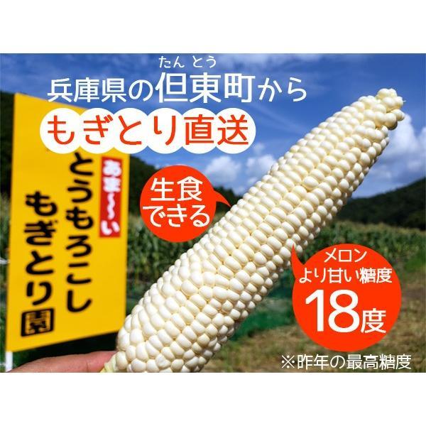 【完売御礼】白いとうもろこし ホワイトコーン ピュアホワイト 雪の妖精 10本セット 生食OK 送料無料|arumama|02