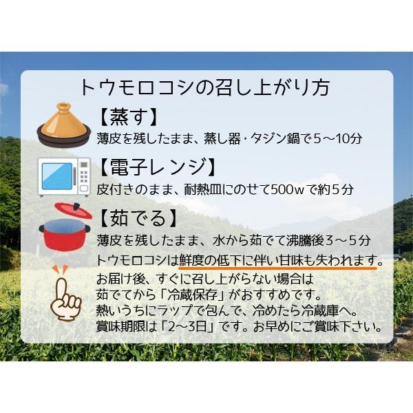 【完売御礼】白いとうもろこし ホワイトコーン ピュアホワイト 雪の妖精 10本セット 生食OK 送料無料|arumama|05