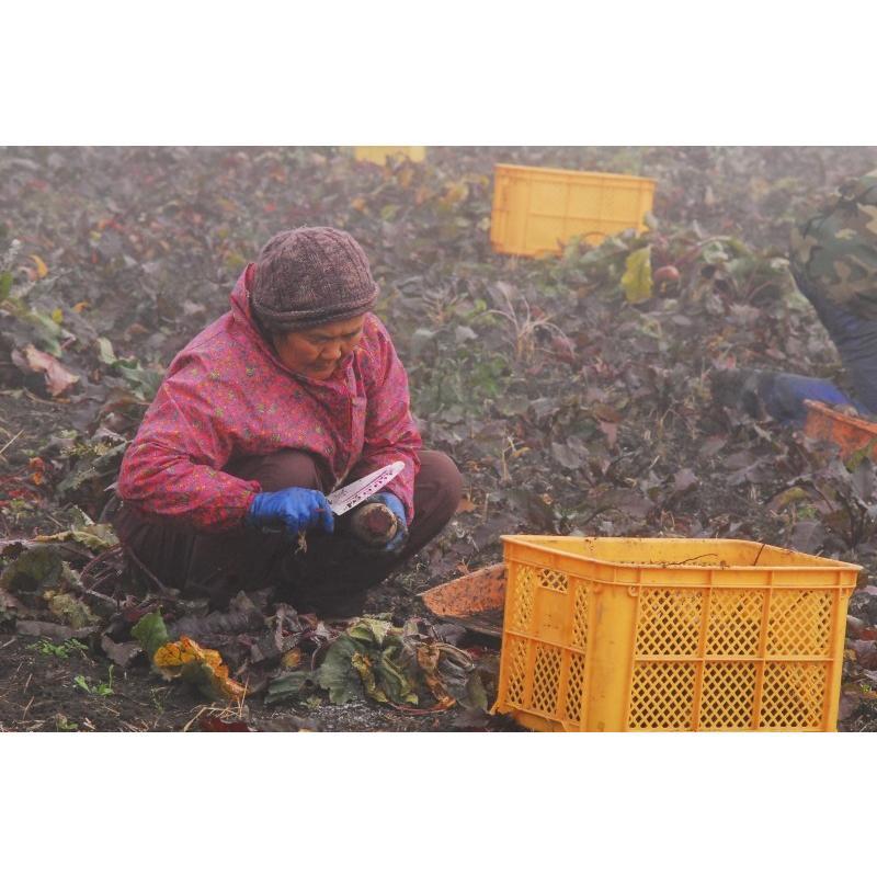 徳用 冷凍野菜 ビーツ 国産 熊本県産 冷凍 カット 1kg 野菜 栄養 業務|asagiri-nouen|03