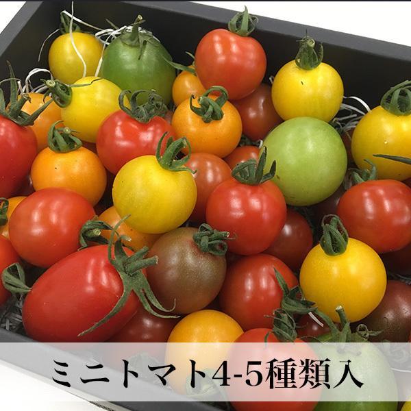 トマトの宝石箱 フルーツトマトの詰め合わせ 化粧箱入  お歳暮 ギフト クール便 asagohanhonpo 02