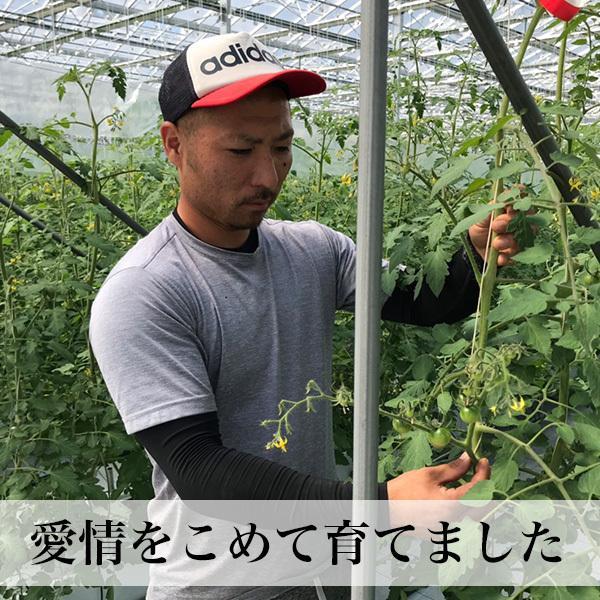 トマトの宝石箱 フルーツトマトの詰め合わせ 化粧箱入  お歳暮 ギフト クール便 asagohanhonpo 04