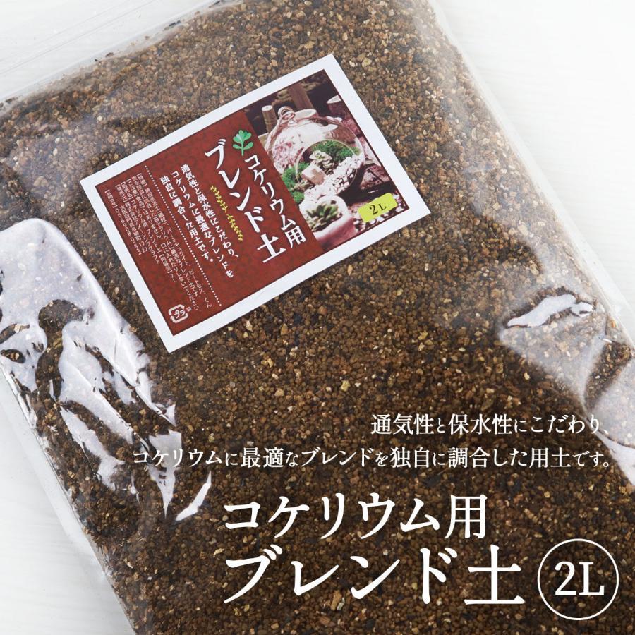 苔テラリウム 用土 コケリウム 土 人気の製品 soil コケリウムブレンド 2L ソイル 新着セール