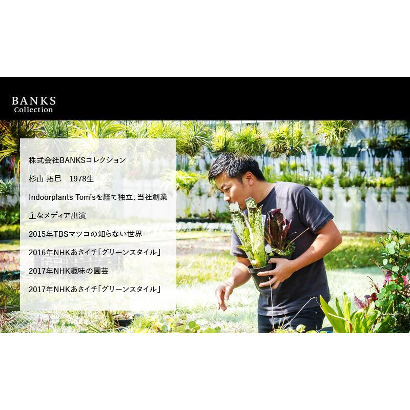 肥料、活力剤 コンボセット THE COMPOST ザ コンポスト 3L、BLACKWATER ブラックウォーター 200cc|bankscollection|17