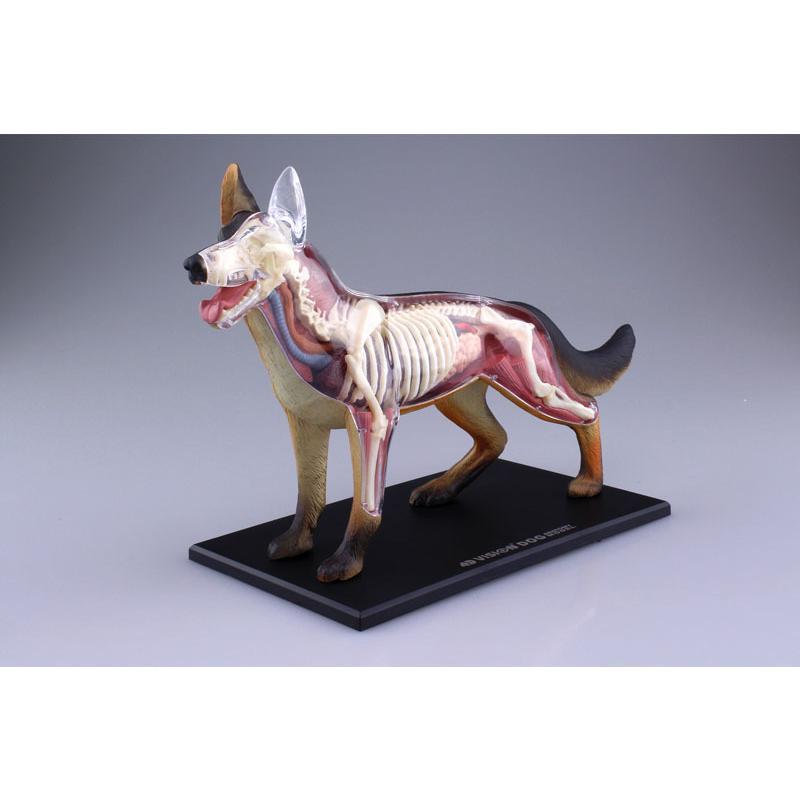 4D VISION 動物解剖モデル 犬解剖モデル【アオシマ 立体パズル】|barchetta|02