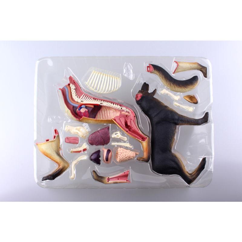 4D VISION 動物解剖モデル 犬解剖モデル【アオシマ 立体パズル】|barchetta|05