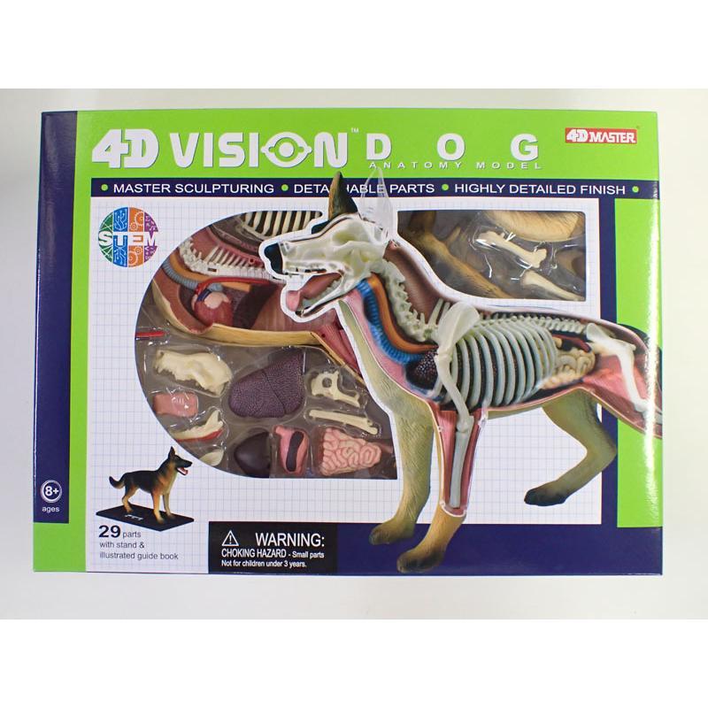 4D VISION 動物解剖モデル 犬解剖モデル【アオシマ 立体パズル】|barchetta|06