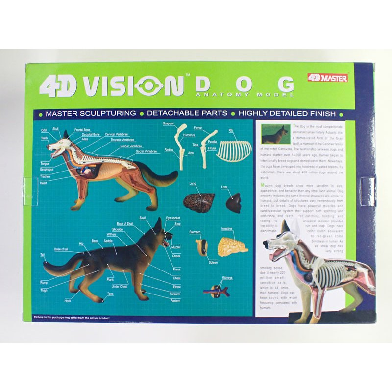 4D VISION 動物解剖モデル 犬解剖モデル【アオシマ 立体パズル】|barchetta|07