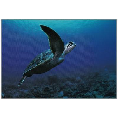 ポストカード 動物 年中無休 買取 風樹社 泳ぐアオウミガメ