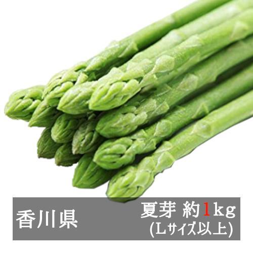 アスパラガス さぬきのめざめ夏芽 約1kg 香川県産|bimi-shunka