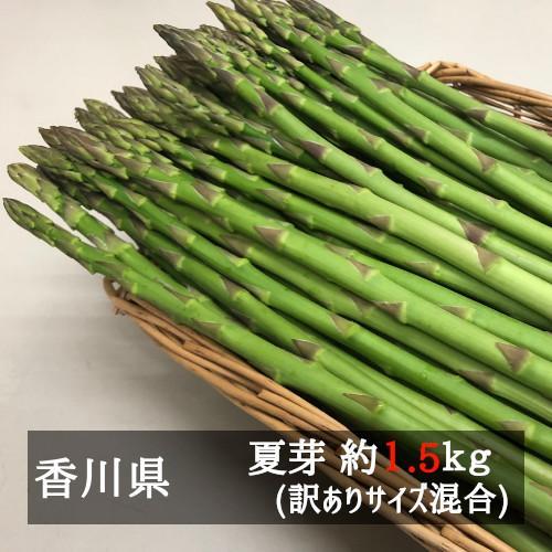 アスパラガス お徳用さぬきのめざめ夏芽(約30cm)サイズ混合 約1.5kg 香川県産 bimi-shunka