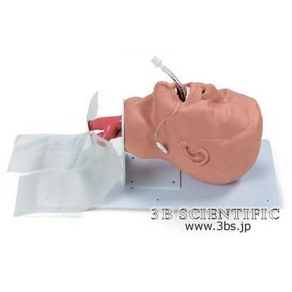 無料健康相談対象製品 世界基準 3Bサイエンフィティック社模型 成人気管挿管トレーナー 鍼灸 模型