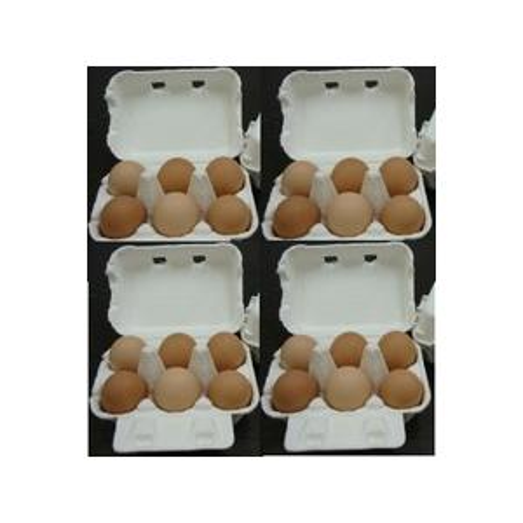 レビューを書けば送料当店負担 庭鶏の卵4ケース24個 返品交換不可