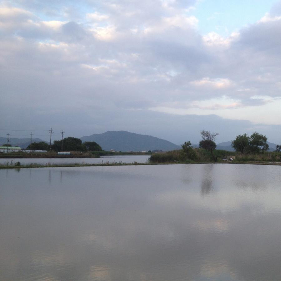 玄米コシヒカリ5kg 農薬・化学肥料不使用 百菜劇場のお米(近江八幡) びわ湖につながる水郷地帯|biwacoi|08