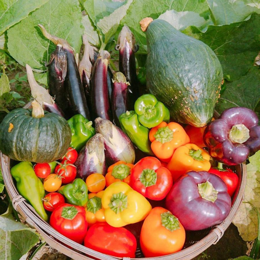 びわ湖が恋する野菜たち 10月30日お届けになります 野菜ボックス 環境負荷の少ない農法|biwacoi|02