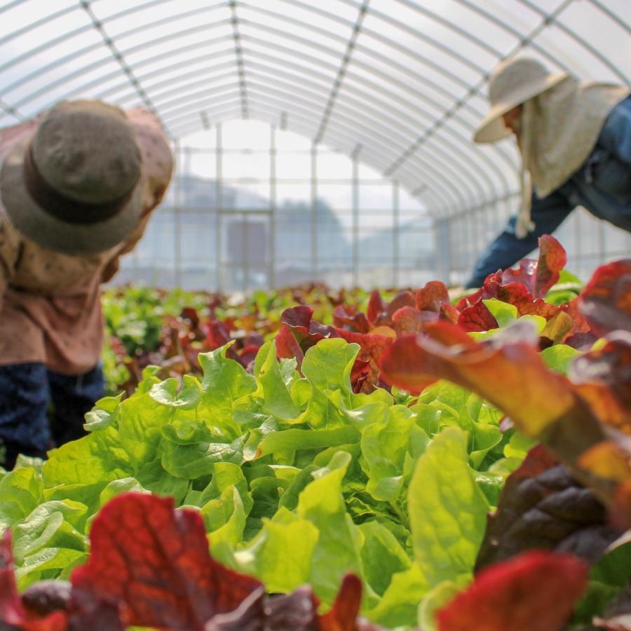びわ湖が恋する野菜たち 10月30日お届けになります 野菜ボックス 環境負荷の少ない農法|biwacoi|04