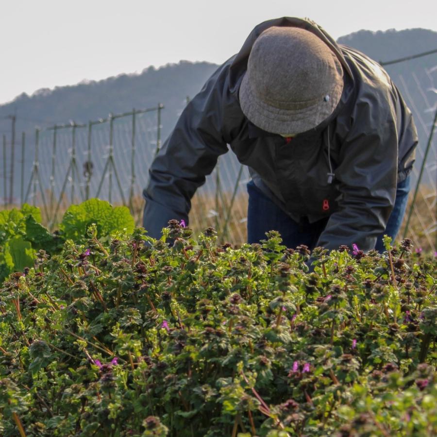 びわ湖が恋する野菜たち 10月30日お届けになります 野菜ボックス 環境負荷の少ない農法|biwacoi|05