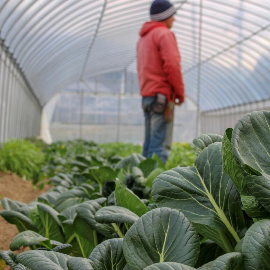 びわ湖が恋する野菜たち 10月30日お届けになります 野菜ボックス 環境負荷の少ない農法|biwacoi|06