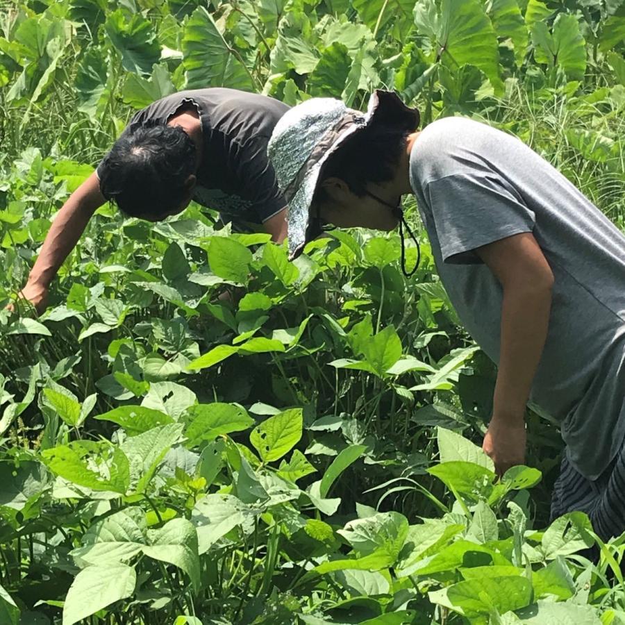 びわ湖が恋する野菜たち 10月30日お届けになります 野菜ボックス 環境負荷の少ない農法|biwacoi|07