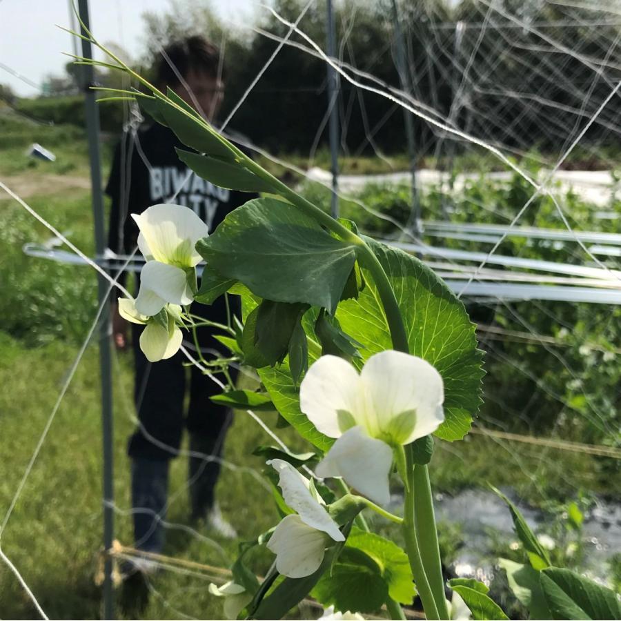 びわ湖が恋する野菜たち 10月30日お届けになります 野菜ボックス 環境負荷の少ない農法|biwacoi|08