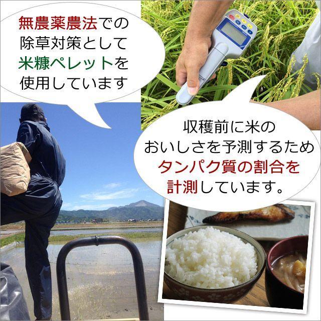 令和2年産 2020年産 米 お米 5kg 夢ごこち 無農薬 滋賀県産 吉田農園 白米 玄米 送料無料|biwaoumi|03
