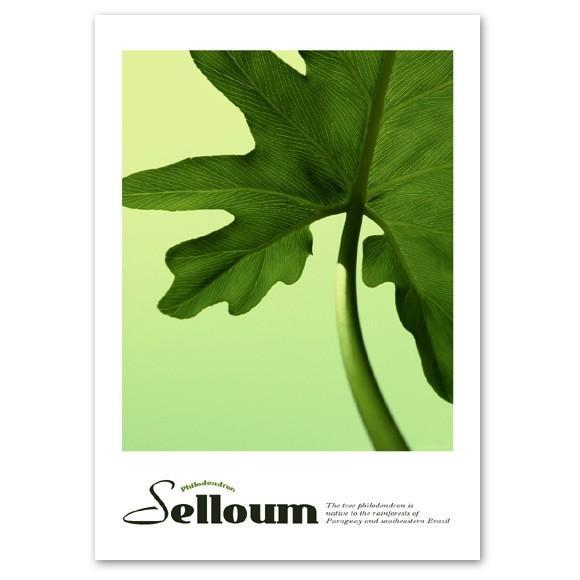 ポスター A2サイズ 『Selloum』 インテリア フォト 人気 花,植物 おしゃれ ポスター Interior Art Poster|blankwall