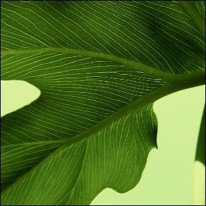 ポスター A2サイズ 『Selloum』 インテリア フォト 人気 花,植物 おしゃれ ポスター Interior Art Poster|blankwall|02