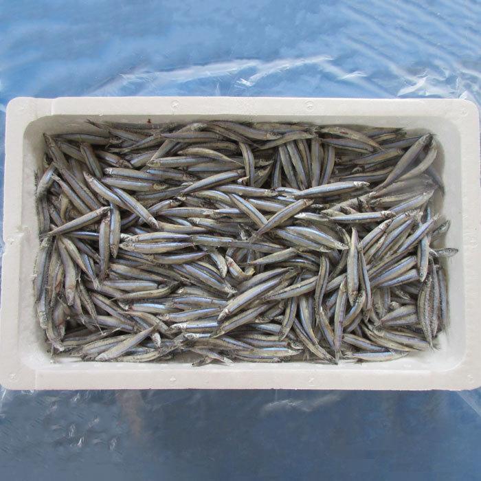 キビナゴ3kg 釣り餌 きびなご ギフ_包装 冷凍板 冷凍 期間限定特価品
