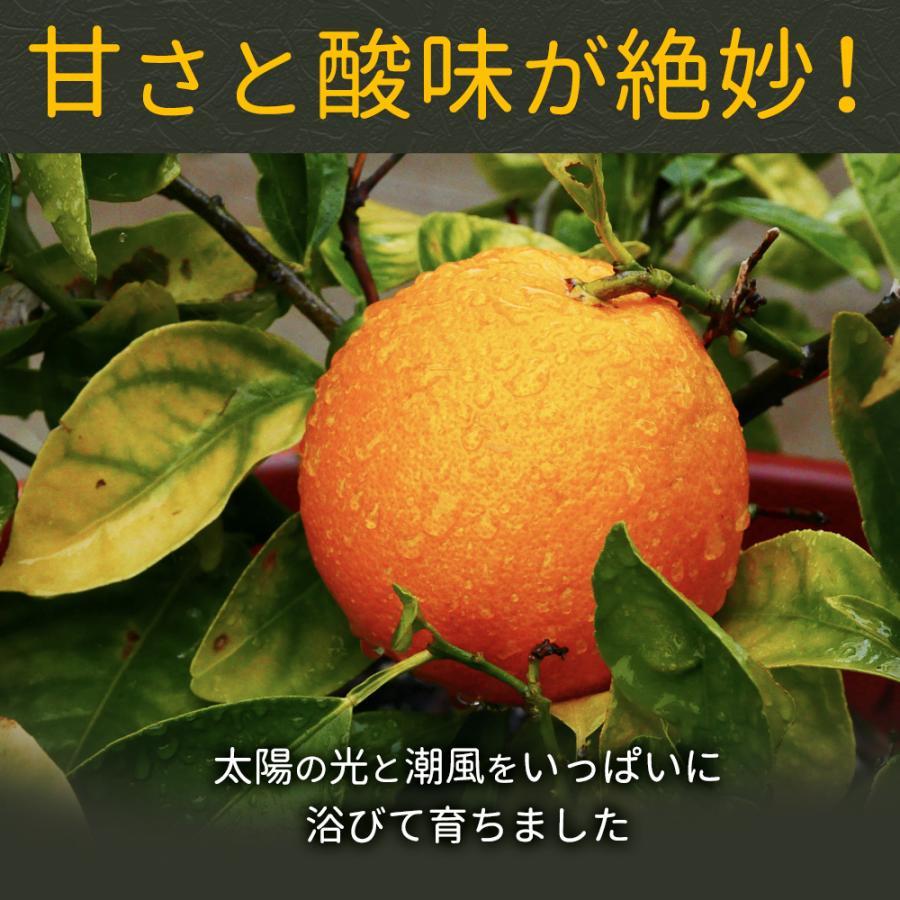 アイス ギフト アイスキャンディ 愛媛県産 みかん 100% 太陽のアイス 冷やしみかん 15本 送料無料 無添加|bokunotamatebakoya|09