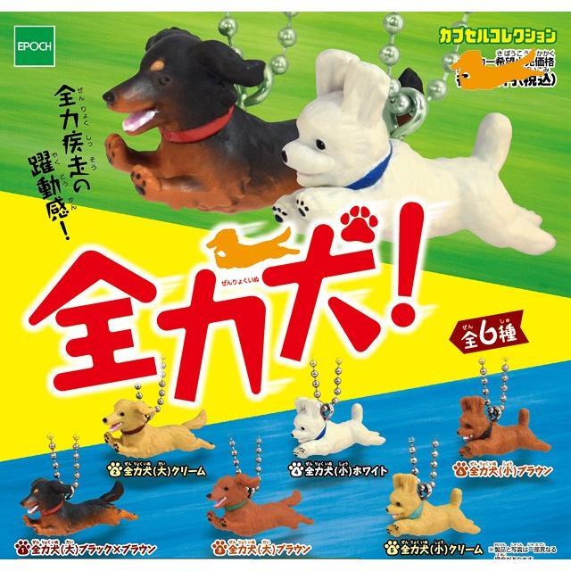 全力犬(6種) コンプリートセット bowwando