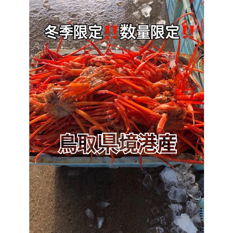 現地直送!!!鳥取県境港産紅ズワイガニ 2尾SET ボイル 茹でてあります!!!|bullion