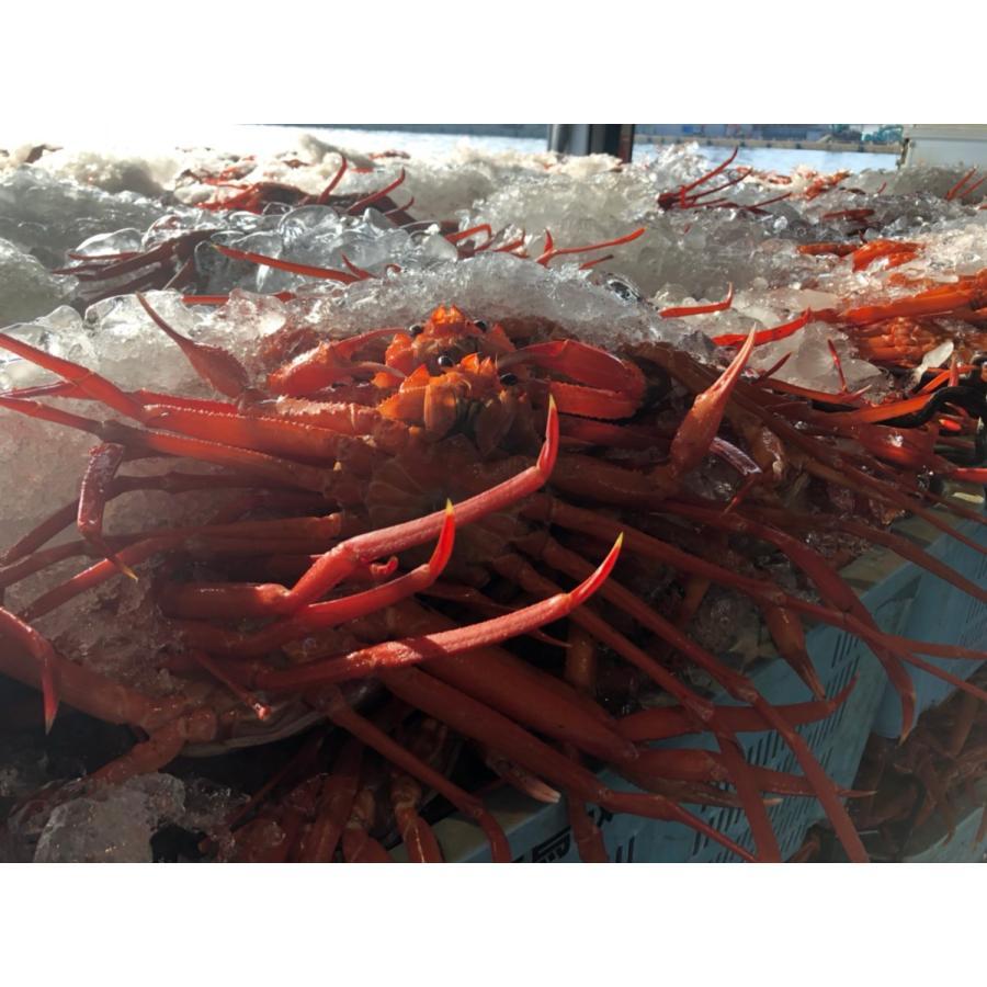 現地直送!!!鳥取県境港産紅ズワイガニ 2尾SET ボイル 茹でてあります!!!|bullion|06