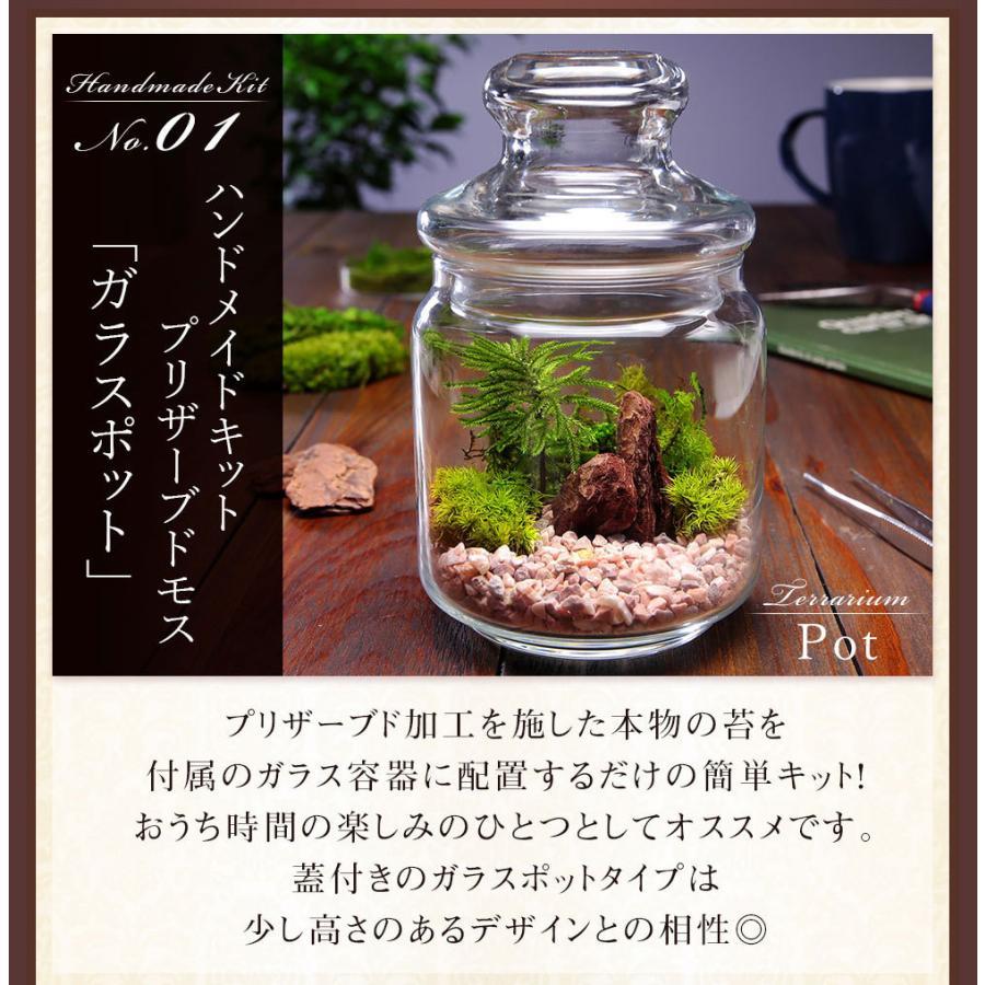 敬老の日 ギフト プレゼント 苔 テラリウム キット ハンドメイドキット プリザーブドモス 手作り おしゃれ イベントギフトL 2021|bunbunbee|04