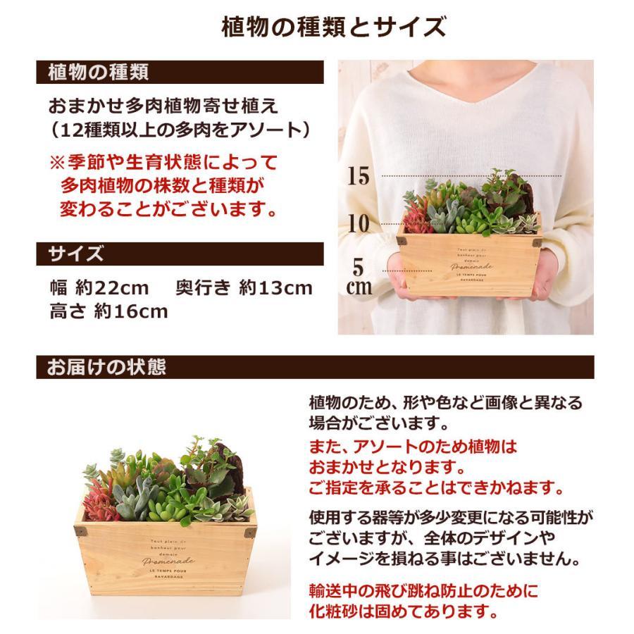 【多肉植物 寄せ植え 誕生日プレゼント ギフト】おまかせ多肉アソートM2|bunbunbee|03