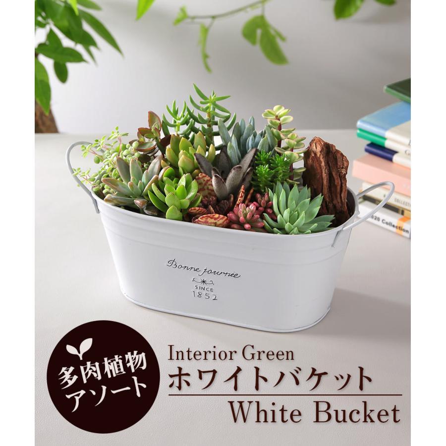 【多肉植物 寄せ植え 誕生日プレゼント ギフト】おまかせ多肉アソートM2|bunbunbee|04