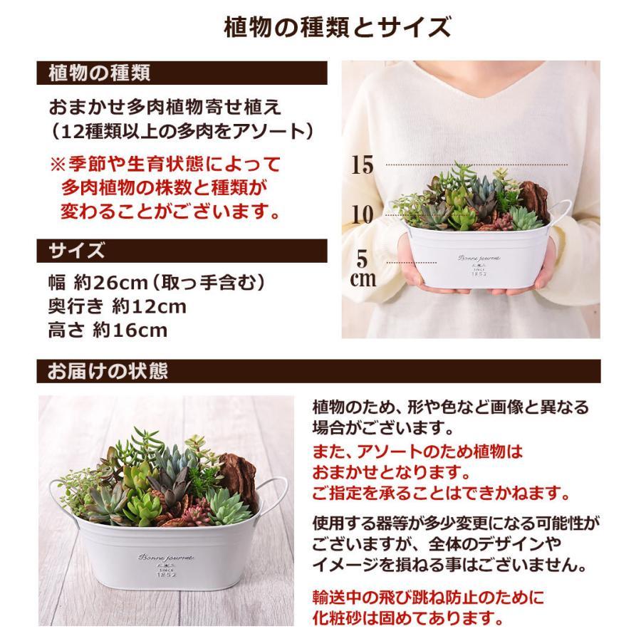 【多肉植物 寄せ植え 誕生日プレゼント ギフト】おまかせ多肉アソートM2|bunbunbee|06