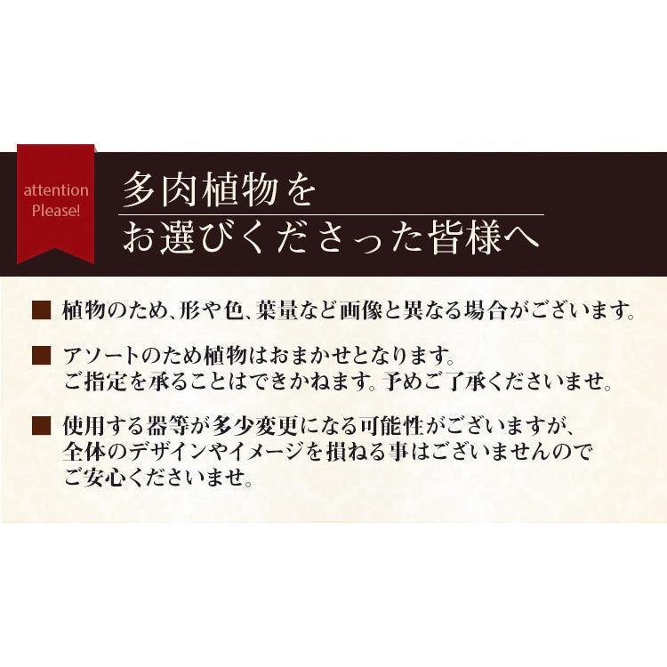 【多肉植物 寄せ植え 誕生日プレゼント ギフト】おまかせ多肉アソートM2|bunbunbee|07