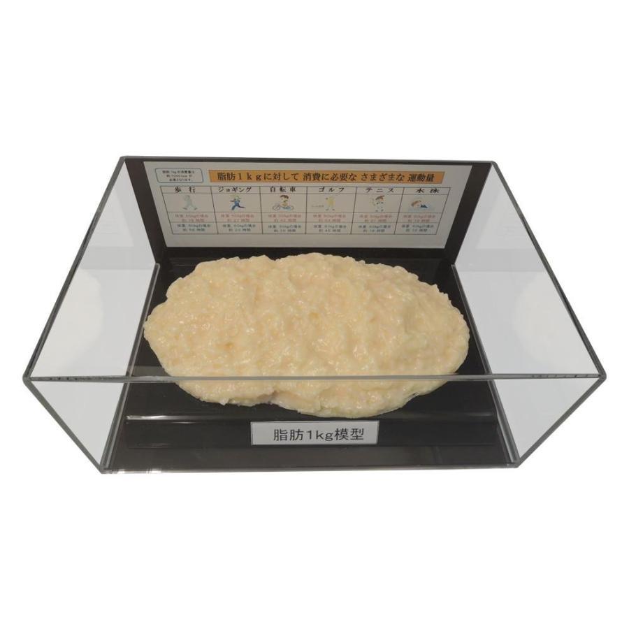 脂肪模型フィギュアケース入 1kg IP-978送料無料