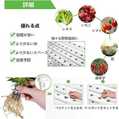 栄養 水菜