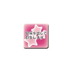 桜吹雪|cacto-loco|02