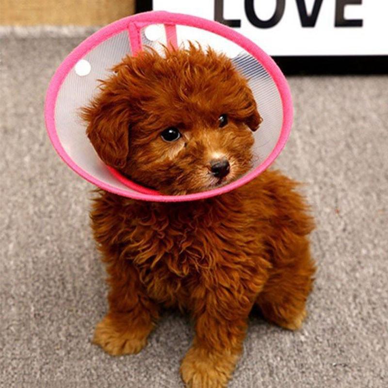 犬 エリザベスカラー 犬用 ソフト 猫 ペット エリザベス 怪我 軽量 抗菌 傷舐め防止 引っ掻き防止 傷口保護 手術後のケア 柔らかい|cactus0812|06