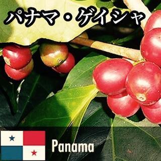 コーヒー豆 全国送料無料 ネットショップ限定価格 スペシャルティコーヒー パナマ・ゲイシャ - 200g cafe-adachi