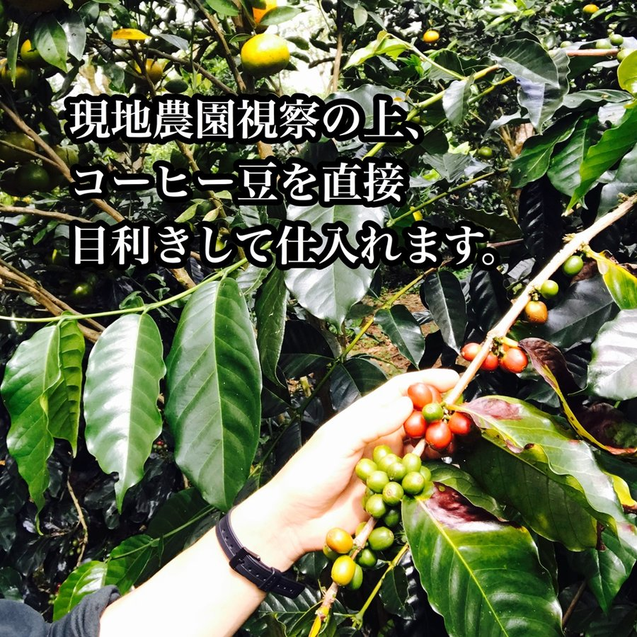 コーヒー豆 送料無料 ストレートコーヒー100g×4種類 人気No.1 飲み比べセット(パナマ・ゲイシャ入り)|cafe-adachi|14