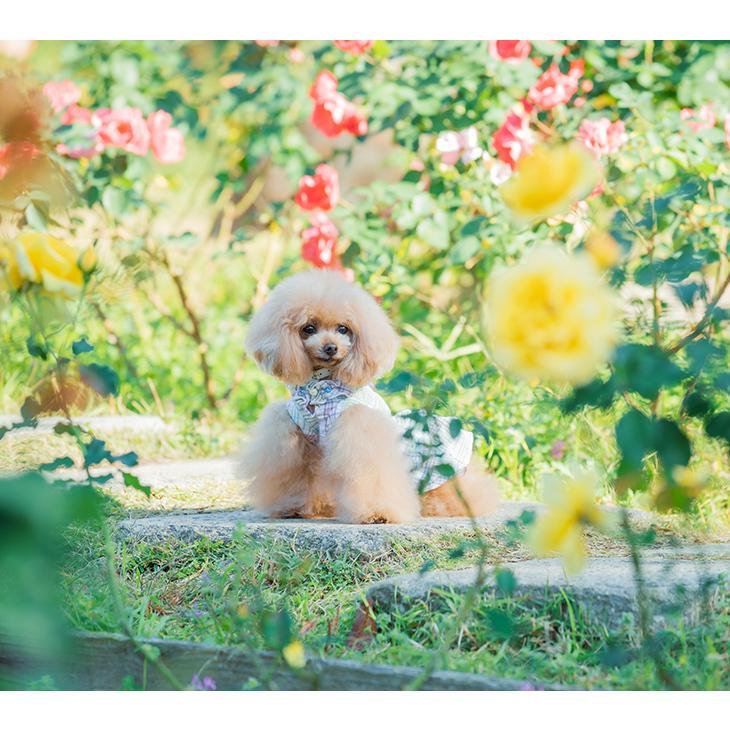 犬 服 犬服  春夏 チェック フリル ワンピース  犬の服 新作 きゃんナナ ドッグウェア ブランド|cannanaonline|02