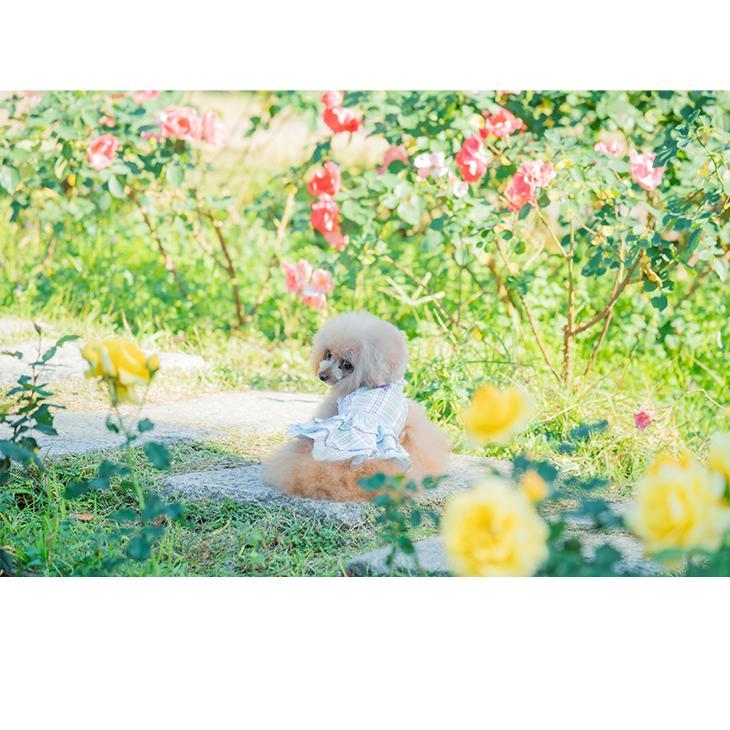 犬 服 犬服  春夏 チェック フリル ワンピース  犬の服 新作 きゃんナナ ドッグウェア ブランド|cannanaonline|07