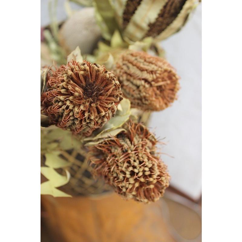 バンクシア・スカーレット Banksia Coccinea (ドライフラワー)|caroblanc|02