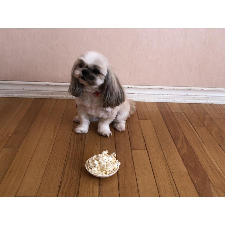 完全無添加 ポップコーン 犬 おやつ 野菜  ノンフライ・ノンオイル ノンシュガー  アレルギーのあるわんちゃんに 8g 2袋セット cbdog 03