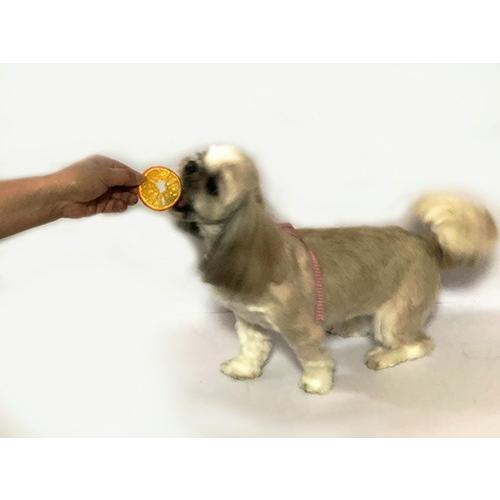 オレンジ チップス【犬のおやつ 無添加】【犬のおやつ 果物】 完全無添加 果物 ノンフライ・ノンオイル ノンシュガー アレルギーのあるわんちゃんに 20g|cbdog|03