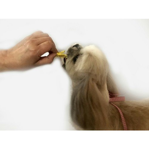 パイナップルチップス【犬のおやつ 無添加】【犬のおやつ 果物】 完全無添加 ノンフライ・ノンオイル ノンシュガー アレルギーのあるわんちゃんに 20g|cbdog|03