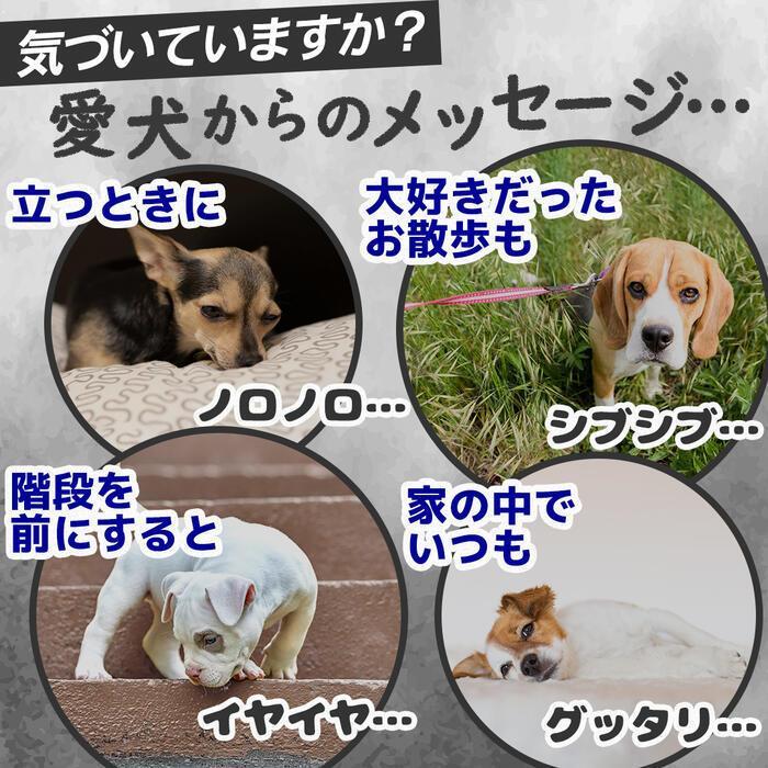 【特許成分 ECME 配合】Wan Royal ワンロイヤル 関節 サポート 犬 犬用 老犬 サプリ サプリメント グルコサミン ドッグフード おやつ ギフト プレゼント celen 02