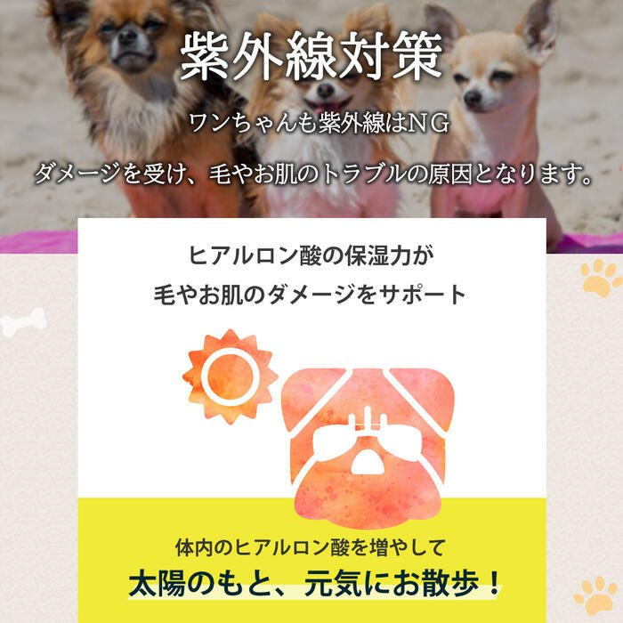 【特許成分 ECME 配合】Wan Royal ワンロイヤル 関節 サポート 犬 犬用 老犬 サプリ サプリメント グルコサミン ドッグフード おやつ ギフト プレゼント celen 12